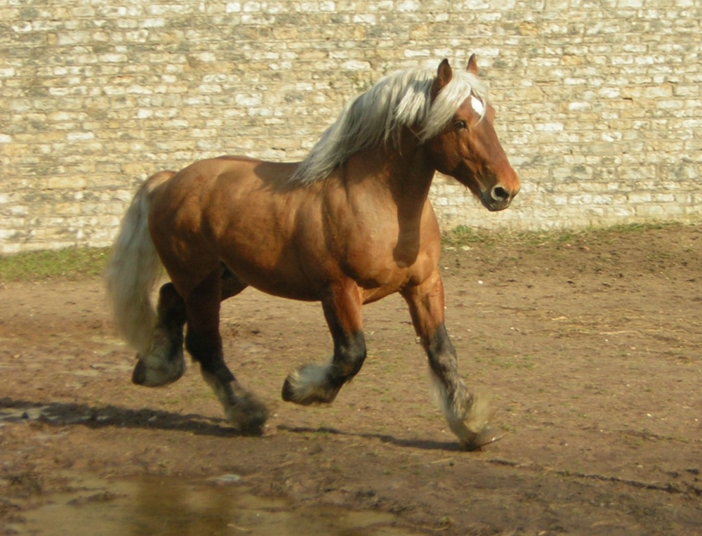 Les photos de chevaux - m Toutes les races de chevaux avec photo